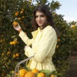 Young woman picking an orange from a tree — Stock Photo #21736537
