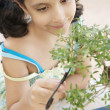 Close up of a young girl concentrated in trimming a bonsai tree - Stock Photo