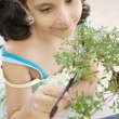Close up of young girl concentrated in trimming bonsai tree — Stock Photo #22108677