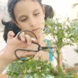 Stock Photo: Portrait of young girl concentrated in trimming bonsai tree