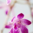 Close up detail of pink orchids — Stock Photo #22109375