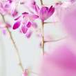 Group of pink orchids — Stock Photo