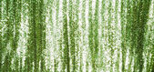 Full frame green sequins curtain background texture. — Stock Photo