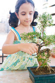 Portrait of a young girl trimming a bonsai tree — Stock Photo