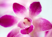 Close up view of a purple orchid — Stock Photo