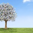 Euro money tree growing on green land with a blue sky. — 图库照片 #22486245