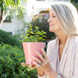 Woman holding a pot with a mint plant — Stock Photo