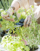 Woman's hands using gardening cutters — Stock Photo