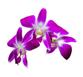 Three orchid flowers — Stock Photo