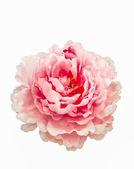 искусственный цветок розы — Стоковое фото