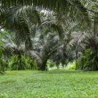 Green of tropical forest palm tree — Stock Photo