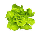 Green Butterhead Lettuce — Stock Photo