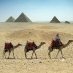 Three camel caravan going through the sand desert near pyramid — Stock Photo
