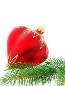 Jul hårda och firry kvist — Stockfoto