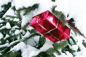 Present box on snowy Christmas tree — Stock Photo