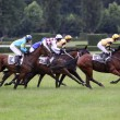 Stock Photo: Qualification on 119th steeplechase VelkPardubicka