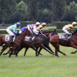 Qualification on The 119th steeplechase Velka Pardubicka - Stock Photo