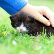 Stock Photo: Kitten in child hand