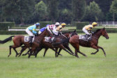 Qualification on The 119th steeplechase Velka Pardubicka — Stock Photo