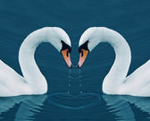 Two swans with drops in the Calm Morning Lake — Stock Photo
