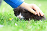Kitten in a child hand — Stock Photo