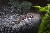 Crocodile in water — Stock Photo