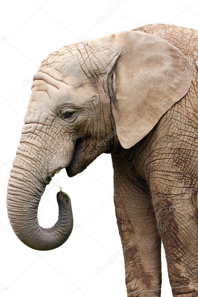 壁纸 大象 动物 682_1023