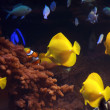 Aquarium with fishes - Stock Photo
