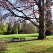 Green park in spring — Stock Photo