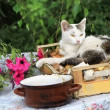 White cat with fly and pot — Stock Photo