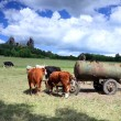 Stronghold Trosky in Cesky raj (Czech paradise) with cows - Stock Photo