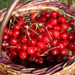 Stock Photo: Red cherry in creel