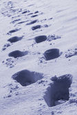 Footprints in white snow — 图库照片