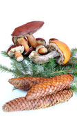 Mushrooms with cones and branch — Stock Photo