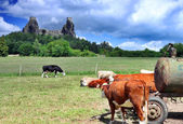 Stronghold Trosky in Cesky raj (Czech paradise) with cows — Stock Photo