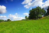Green meadow with blue sky — Stock Photo