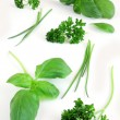 Green herbs — Stock Photo #20563613