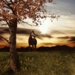 Balck horse on the nature — Stock Photo