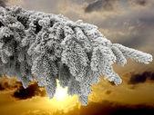 分支机构与雪 — 图库照片
