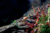 Small beetle — Stock Photo