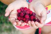 Mani della ragazza con lampone rosso — Foto Stock