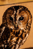 Owls Head — ストック写真
