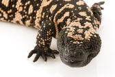 Gila Monster (Heloderma suspectum) — Stock Photo