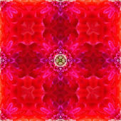 Abstract red floral kaleidoscope — Stock Photo