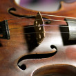 Violin — Stock Photo #21026479