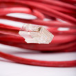 Red lan cable - Stock Photo