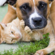 Love between cat and a dog — Stock Photo