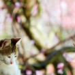 Grown-up cat in natural surroundings - Stock Photo