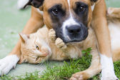 Love between cat and a dog — 图库照片