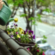 Super 35mm camera - watering flowers on a balcony — Stockvideo